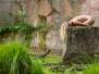 Tělo skal